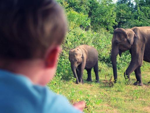 Uda Walawe au Sri Lanka, safari et grand hôtel !
