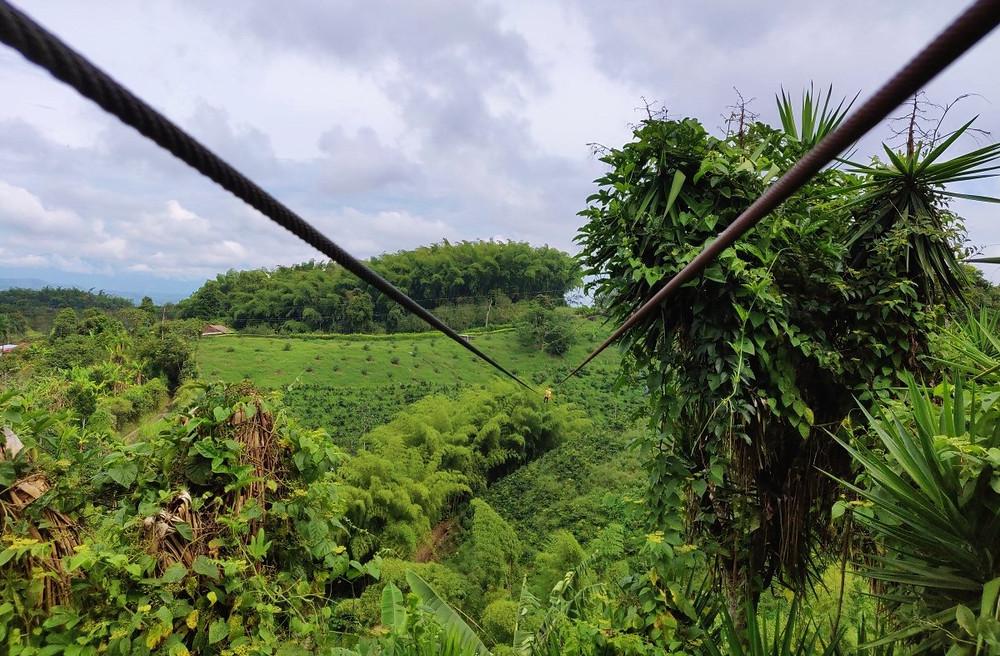 champ de café Alcala Colombie