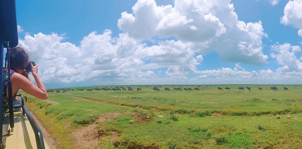 Gnous serengeti