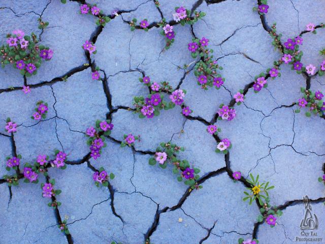 Plateau colorado en fleurs