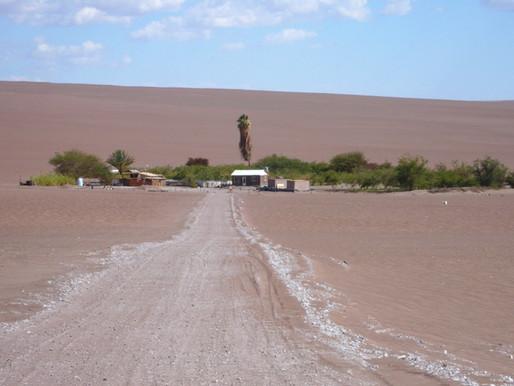 Pica, oasis dans le désert de Tarapacá au Chili