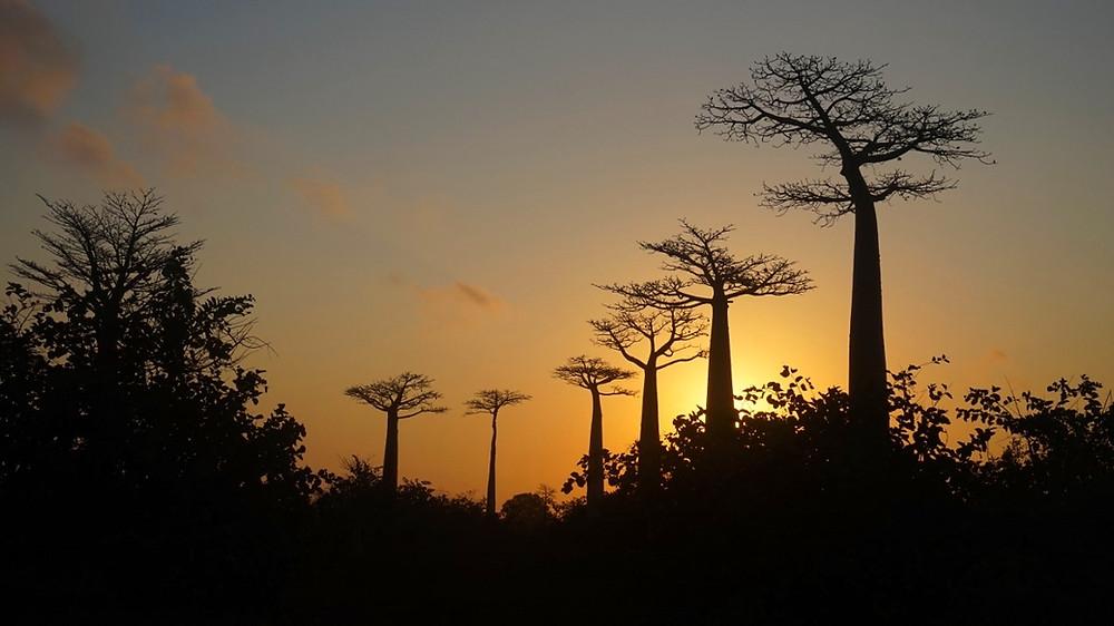 coucher de soleil allée des baobabs Madagascar
