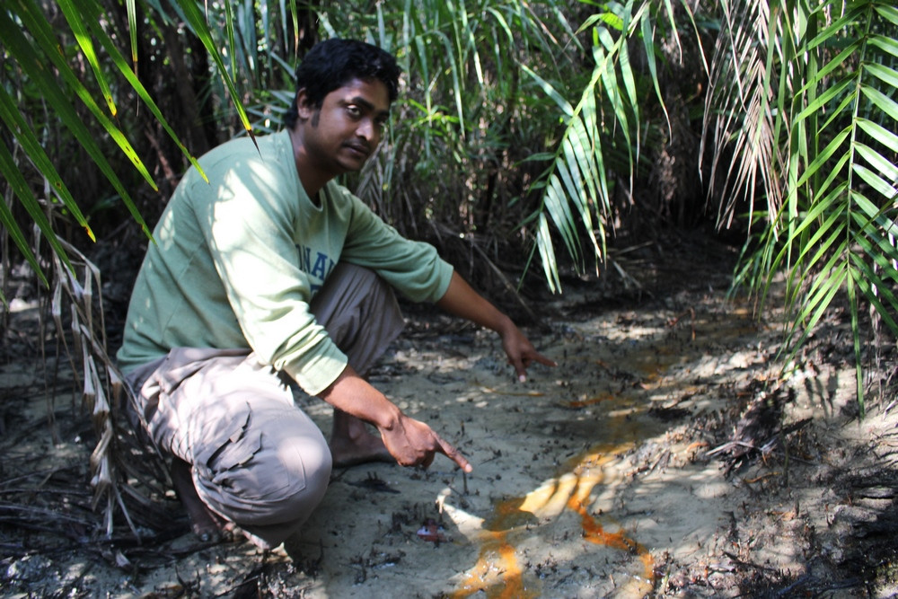 safari tigre Sundarbans voyage Bangladesh