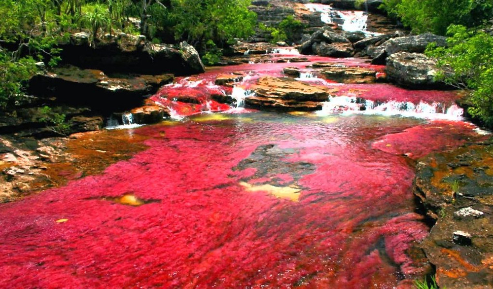 cano cristales rouge rose