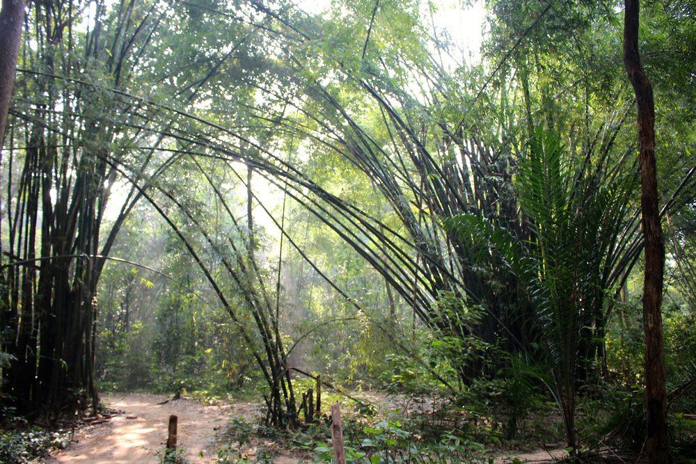 Lawachara National Park sreemangal bangladesh
