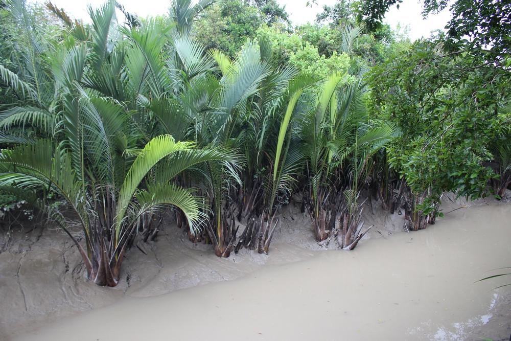 Sundarbans voyage Bangladesh