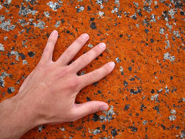 main sur un rocher de la bay of fires