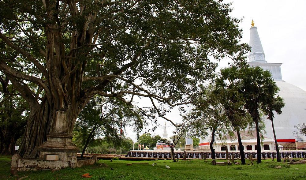 pagode Anuradhapura