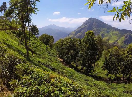 Ella au Sri Lanka, Montagnes et Plantations
