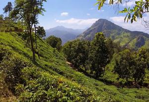 Ella Sri Lanka visite