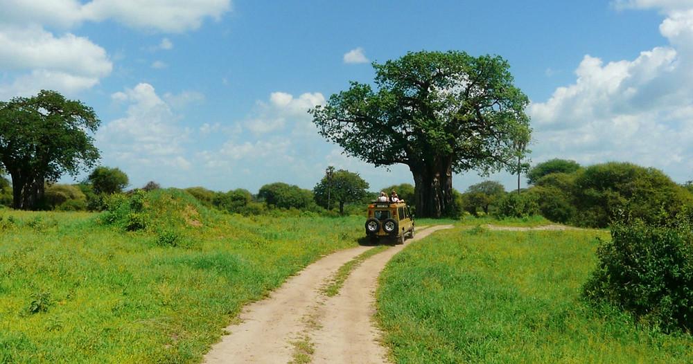 safari tarangire