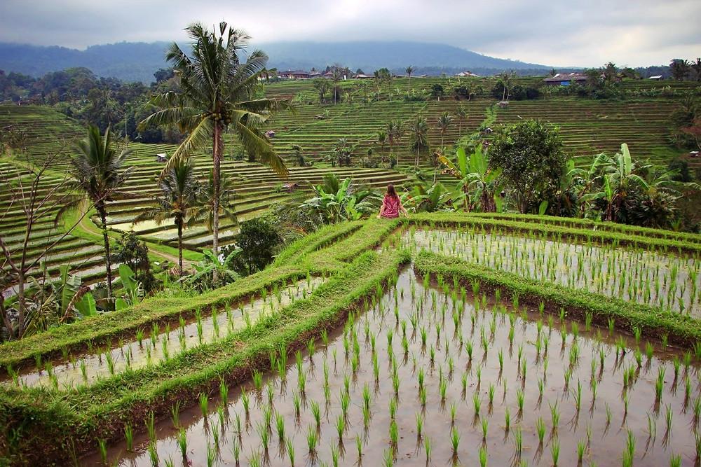 blog de voyage Bali en famille