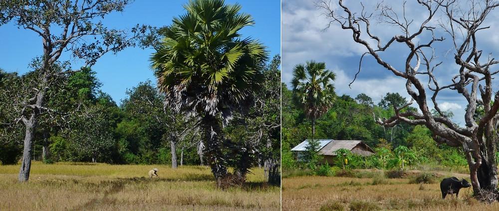 Don Khong 4000 îles Laos voyage