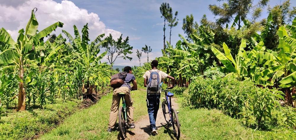 Mto wa mbu vélo