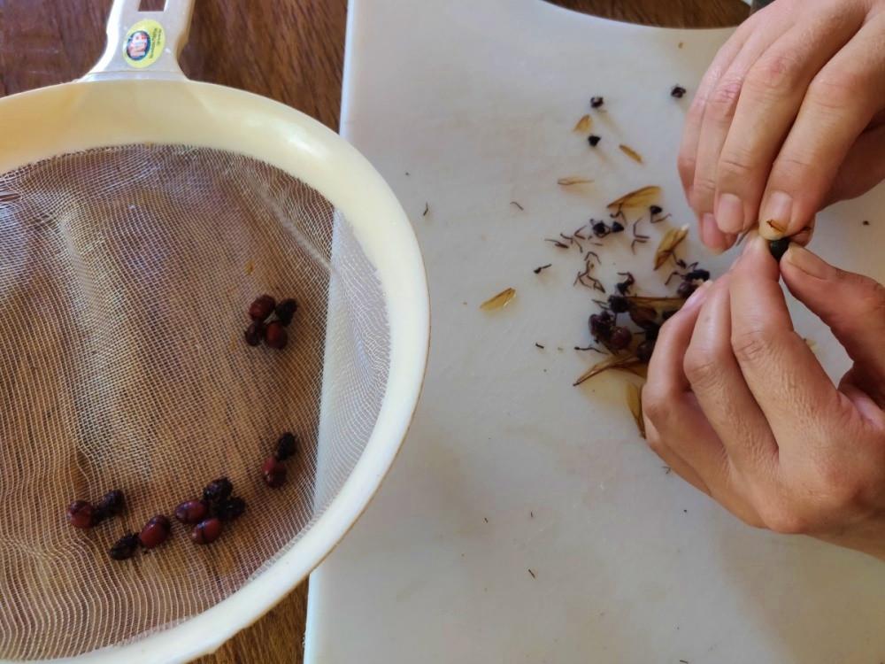 Fourmis grillées barichara colombie