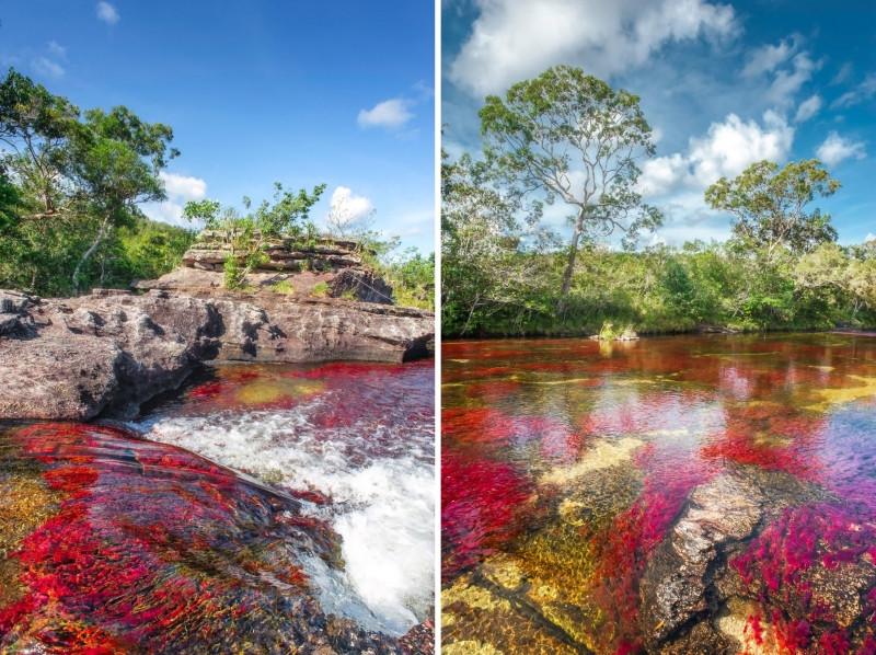 Caño Cristales, la rivière aux cinq couleurs en Colombie