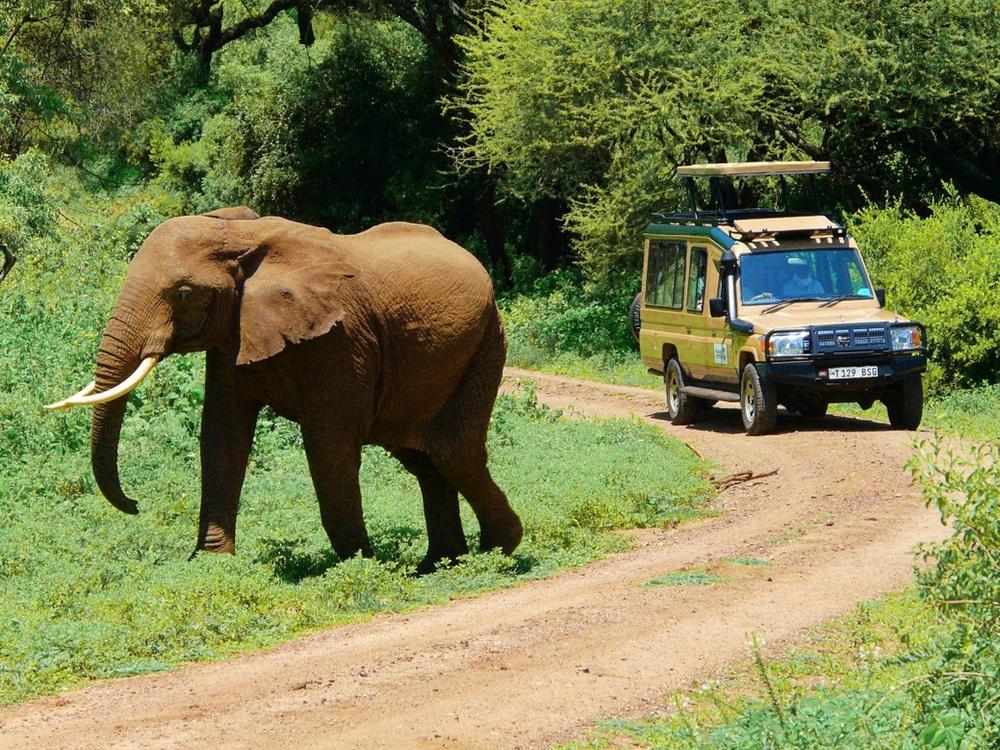 elephant safari parc manyara