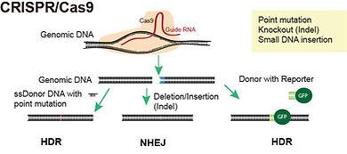 Übersicht_CRISPR.jpg