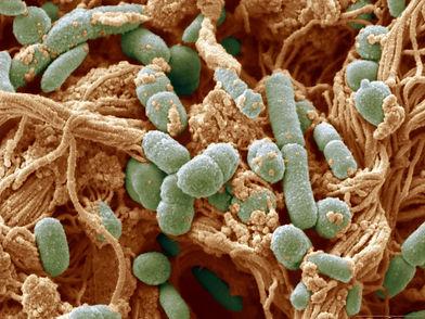 microbes.jpeg