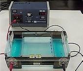 scientech-paper-electrophoresis-apparatu