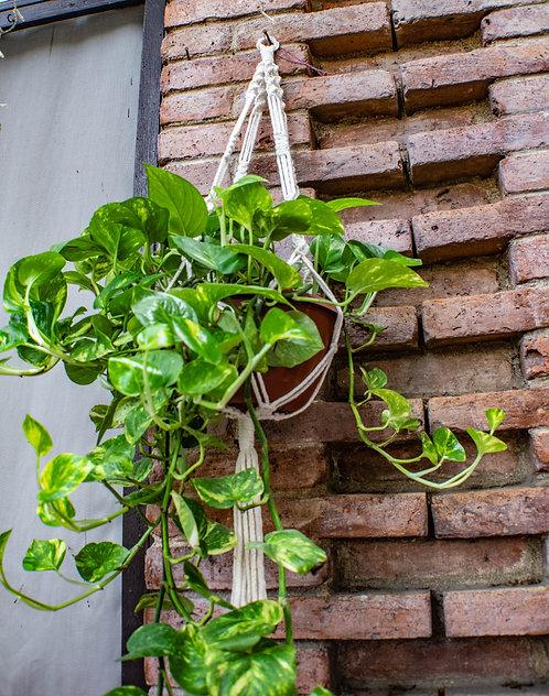 Long Macrame Plant Hanger