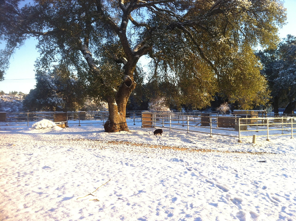 snow 2015 horse corrals.JPG