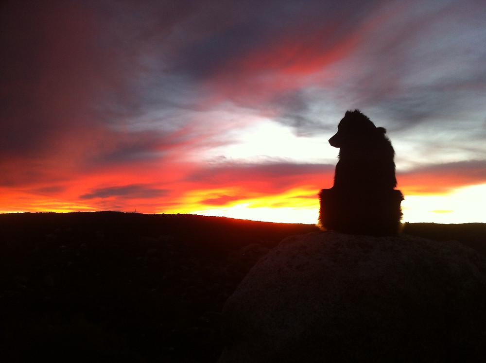 rose acre sunset.JPG