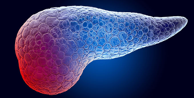 Structural Approach to Cancer: Scientists create first-of-its-kind 3D organoid model of the human pancreas