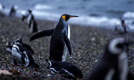patagonia 2 (1).jpg