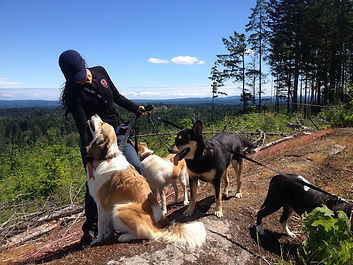 dog daycare nanaimo, doggy daycare, doggie daycare, dog walking nanaimo, holistic dog care, natural dog care, daycare for dogs nanaimo