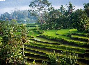 345348-nature-landscape-photography-morn