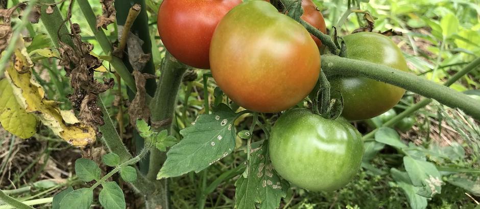 「オルタナ農園リカバリープログラム」=自然治癒力
