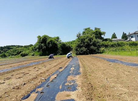 「援農プログラム@永田農園さま」