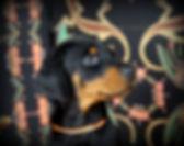Mono-kennel Trudgard