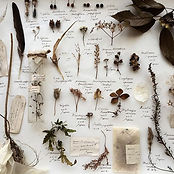 Furighedda gardening blog.jpg