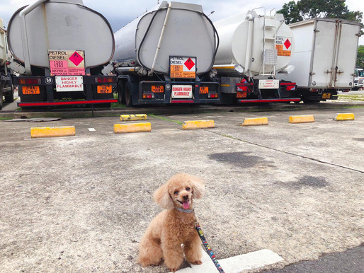 Visit to Pet Station warehouse sale 2019