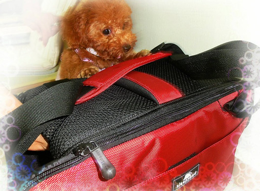 Training your dog to love the carrier