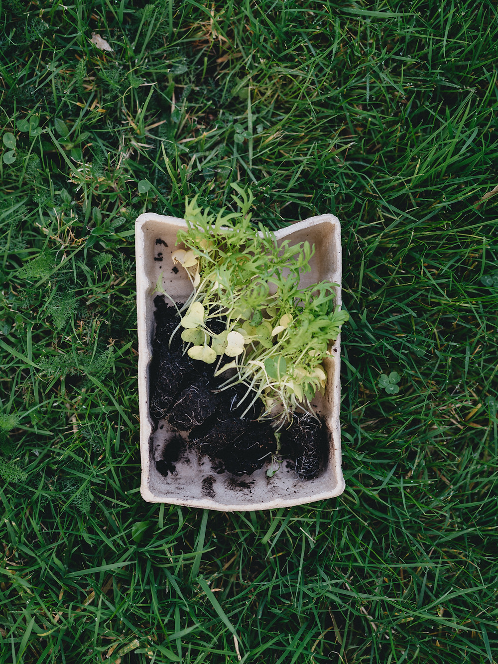 A compostable container takes a long time to degrade in nature