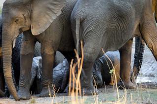 Mamans surveillants les petits lors d'un bain de boue