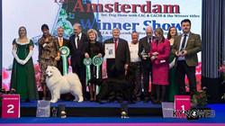 BIS Amsterdam Winner