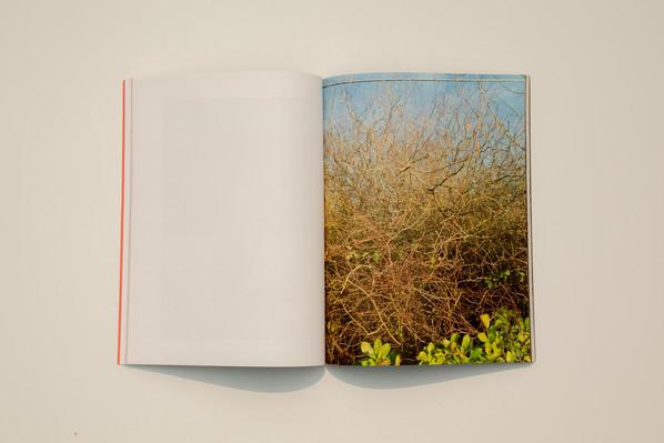 Menzine-shots-15.jpg