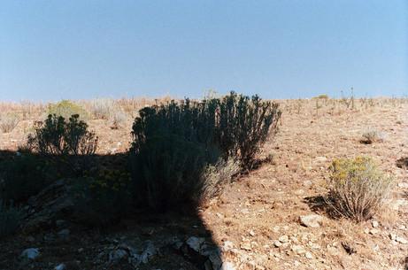 Desert_Tree_Zine_35.jpg