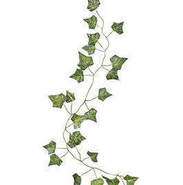 Green Ivy.jpg