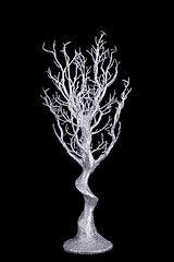 Silver 75cm Manzanita Tree.jpg
