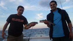 Lake Erie Walleye Drifting
