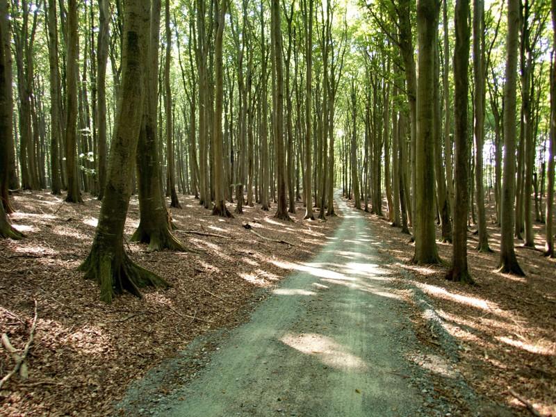 lesy NP Jasmund