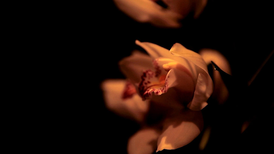 orchidee6-1_edited.jpg