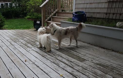 Ozzy & Sophie plotting...