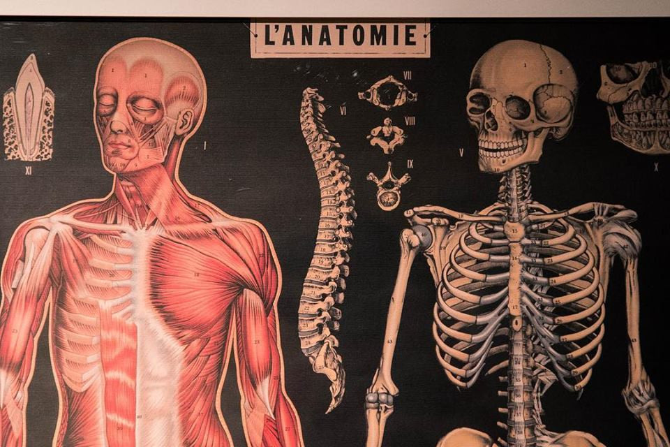 Photogrpah of an image of the human anatomy