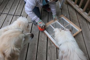 Finn, Ozzy & Sophie helping?